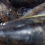 Peapod Recordings Banner