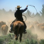 janis-miglavs-cowboy-driving-cattle-with-lasso-through-central-oregon-usa