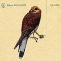Brian Borcherdt - Coyotes